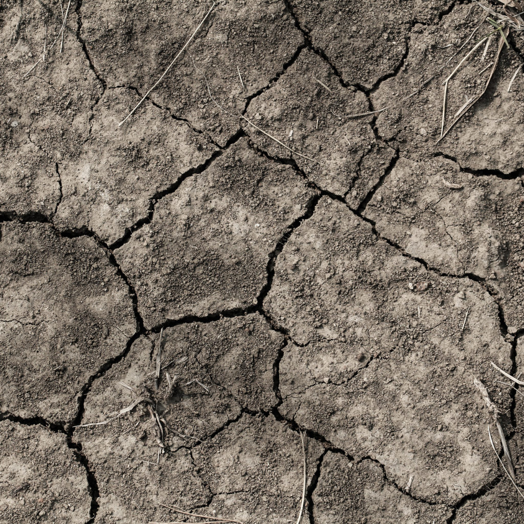 Photograph of dry dirt, cracked in the sun.